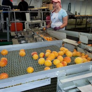 Food industry Funding to bolster the sector